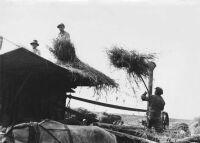Cséplés gőzgéppel az 1920-as években