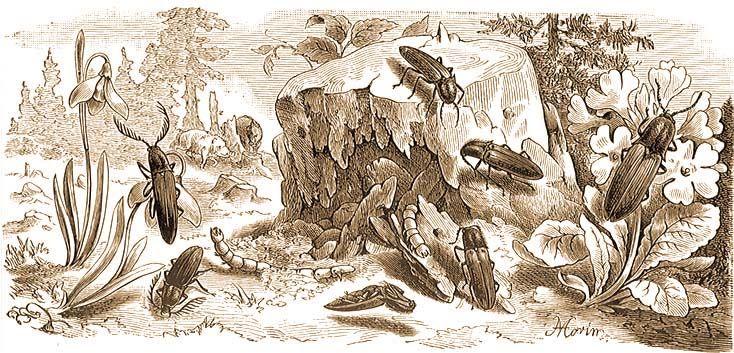 pattanobogar drotféreg)
