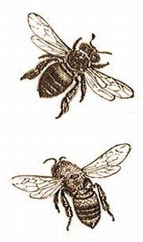 Méhek gondozása