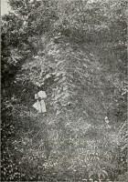 Részlet a kővári várból 1898-ban.